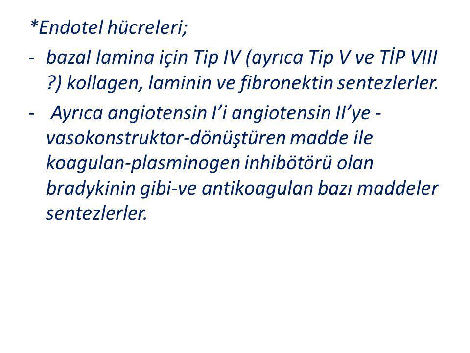 *Endotel hücreleri; bazal lamina için Tip IV (ayrıca Tip V ve TİP VIII ) kollagen, laminin ve fibronektin sentezlerler.