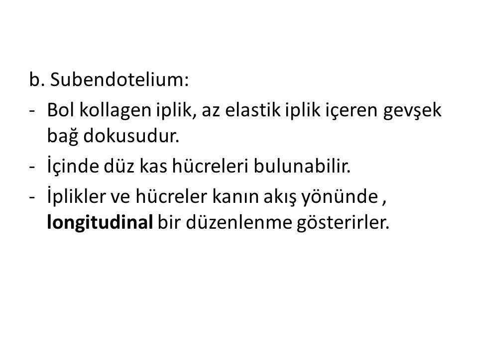 b. Subendotelium: Bol kollagen iplik, az elastik iplik içeren gevşek bağ dokusudur. İçinde düz kas hücreleri bulunabilir.