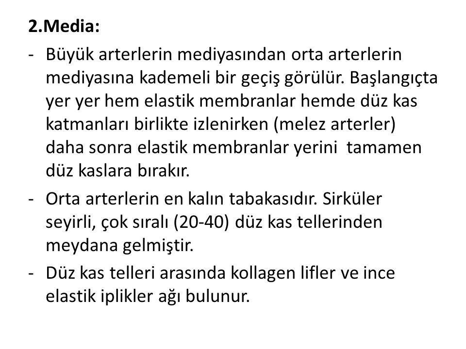 2.Media:
