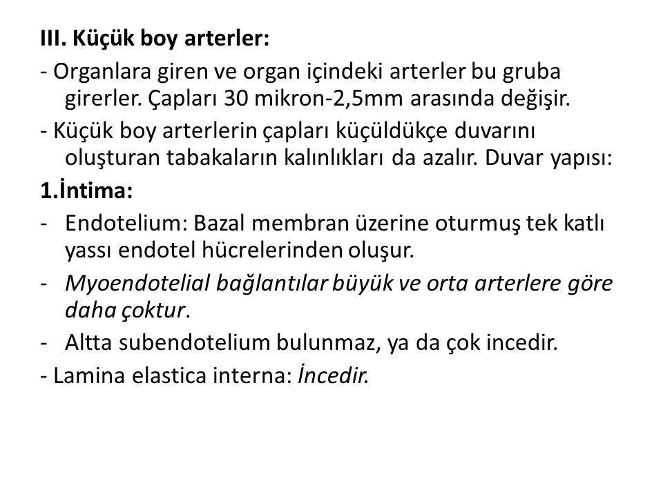 III. Küçük boy arterler: