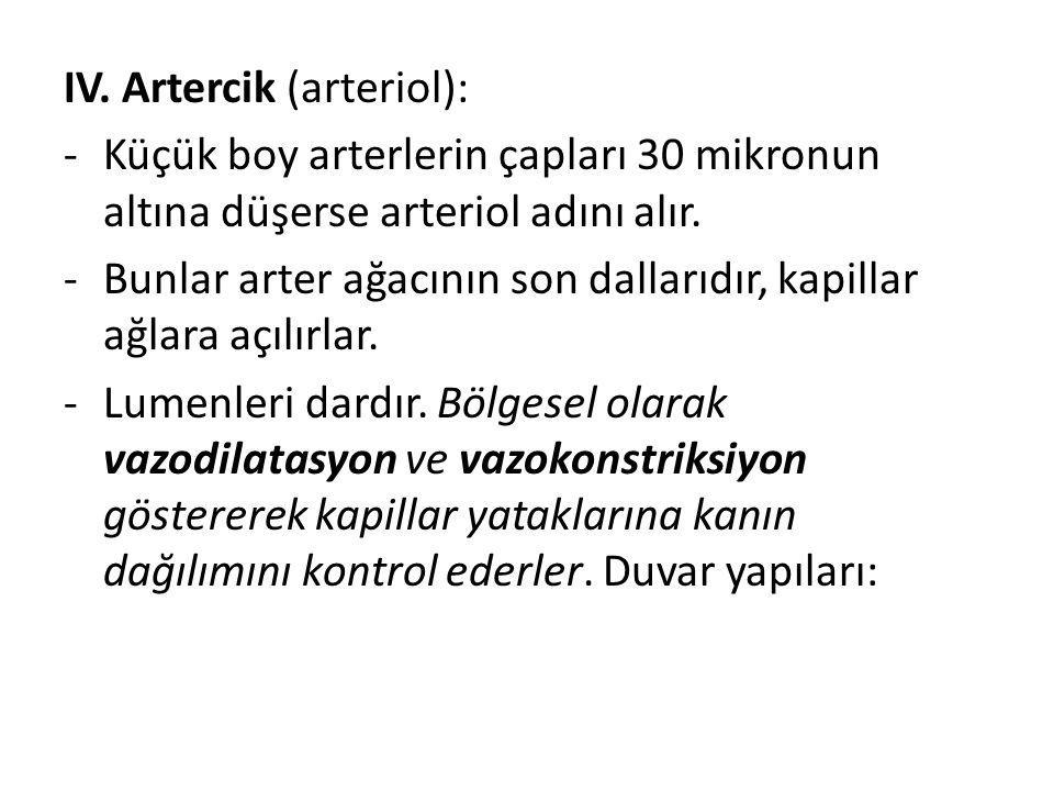 IV. Artercik (arteriol):