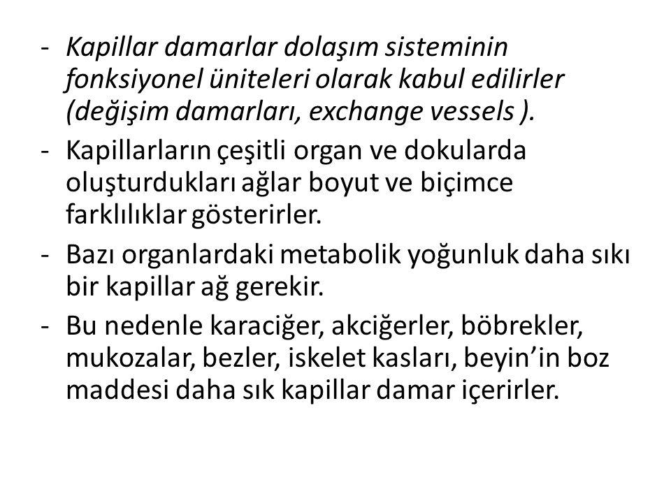 Kapillar damarlar dolaşım sisteminin fonksiyonel üniteleri olarak kabul edilirler (değişim damarları, exchange vessels ).