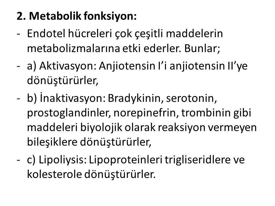 2. Metabolik fonksiyon: Endotel hücreleri çok çeşitli maddelerin metabolizmalarına etki ederler. Bunlar;