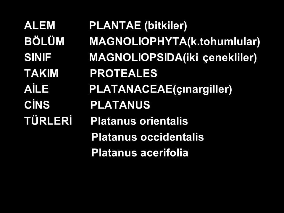 ALEM PLANTAE (bitkiler)