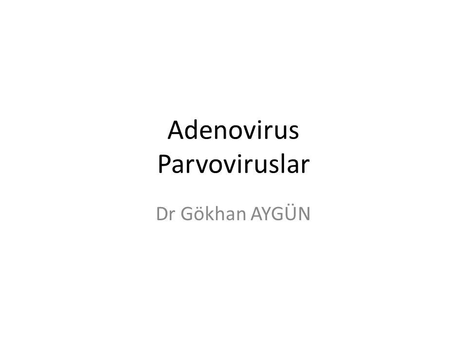 Adenovirus Parvoviruslar