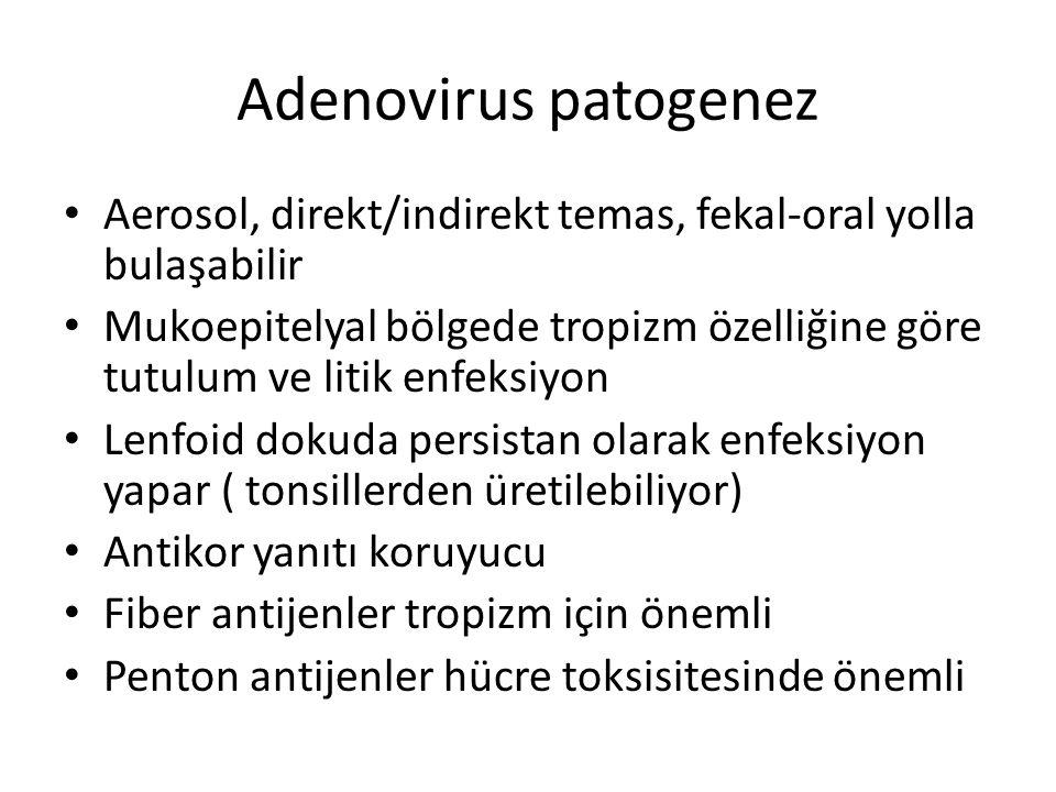 Adenovirus patogenez Aerosol, direkt/indirekt temas, fekal-oral yolla bulaşabilir.