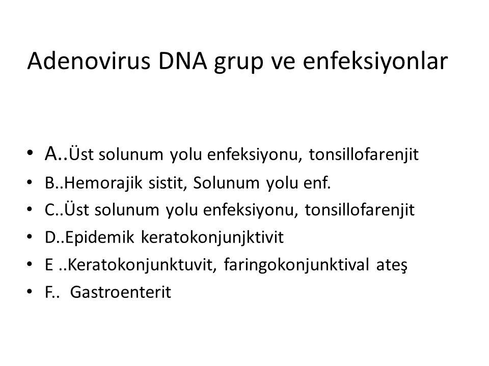Adenovirus DNA grup ve enfeksiyonlar