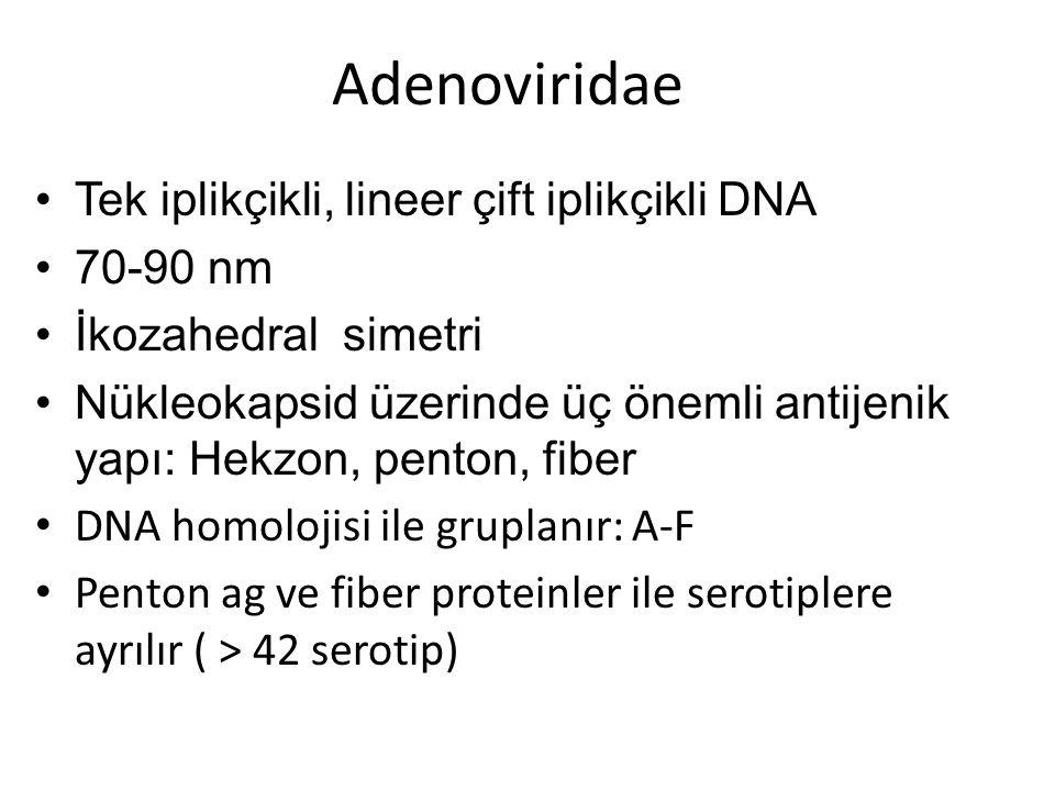 Adenoviridae Tek iplikçikli, lineer çift iplikçikli DNA 70-90 nm