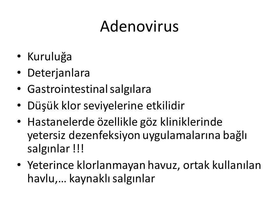 Adenovirus Kuruluğa Deterjanlara Gastrointestinal salgılara