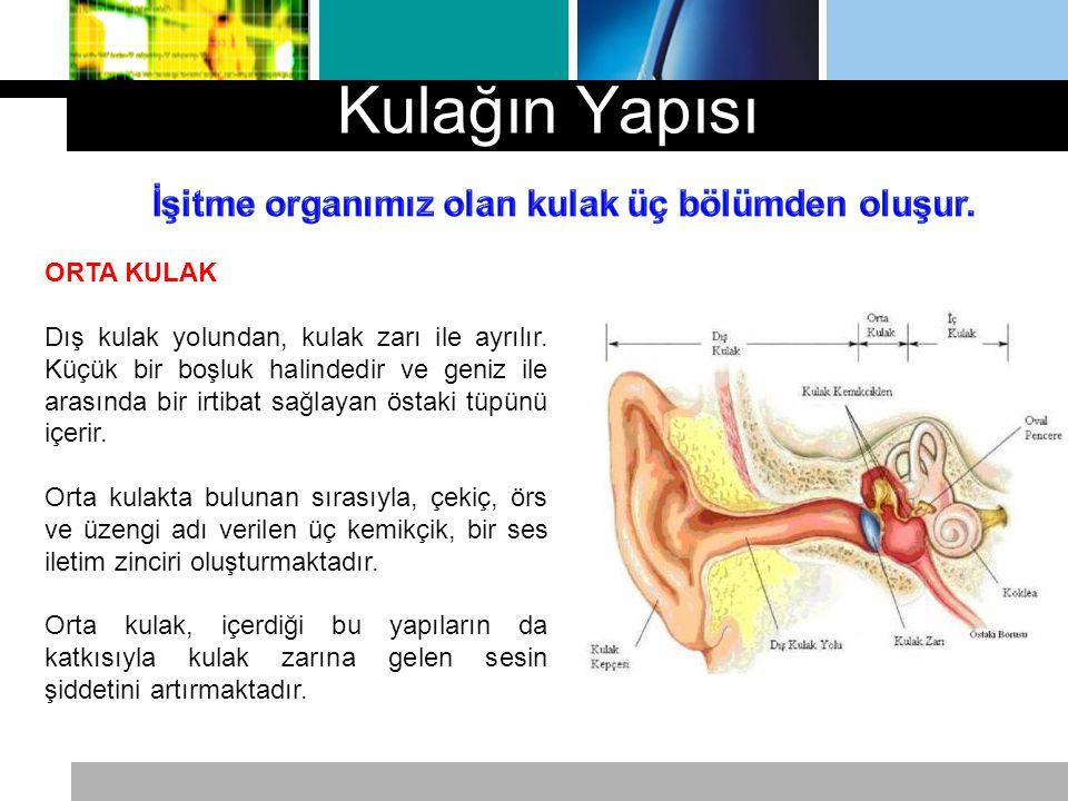 Kulağın Yapısı İşitme organımız olan kulak üç bölümden oluşur.