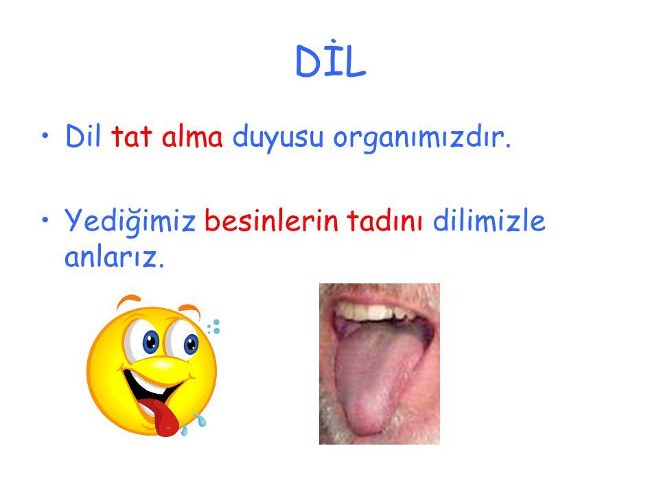DİL Dil tat alma duyusu organımızdır.