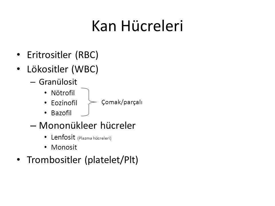 Kan Hücreleri Eritrositler (RBC) Lökositler (WBC) Mononükleer hücreler