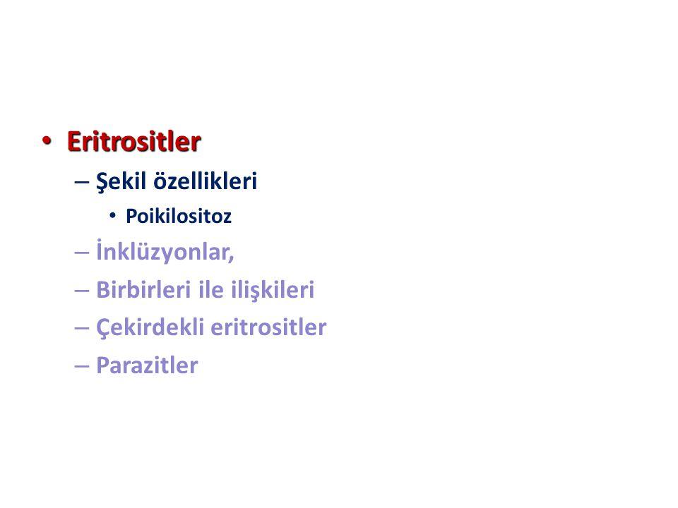Eritrositler Şekil özellikleri İnklüzyonlar, Birbirleri ile ilişkileri