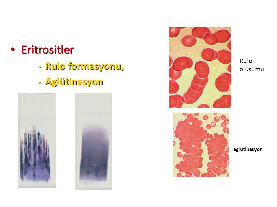 Eritrositler Rulo formasyonu, Aglütinasyon Rulo oluşumu aglutinasyon