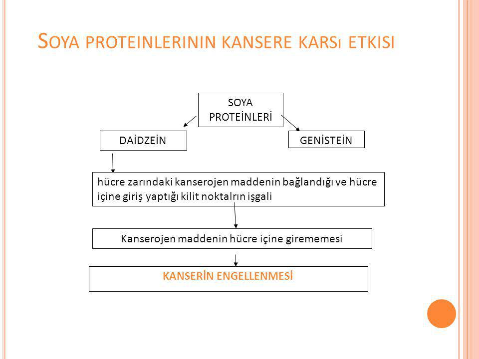 Soya proteinlerinin kansere karsı etkisi