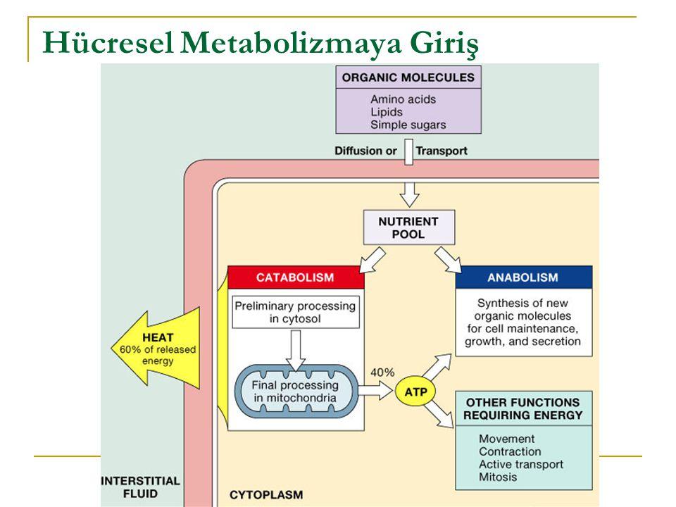 Hücresel Metabolizmaya Giriş