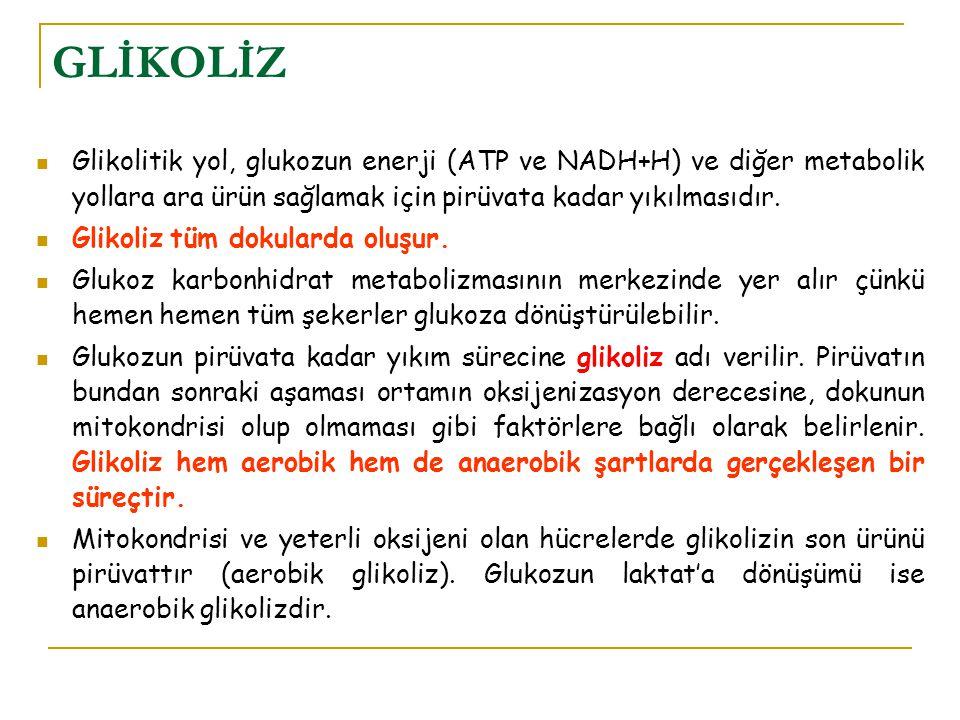 GLİKOLİZ Glikolitik yol, glukozun enerji (ATP ve NADH+H) ve diğer metabolik yollara ara ürün sağlamak için pirüvata kadar yıkılmasıdır.