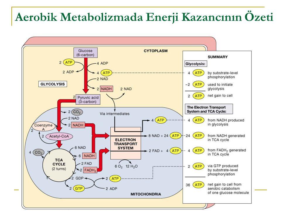 Aerobik Metabolizmada Enerji Kazancının Özeti