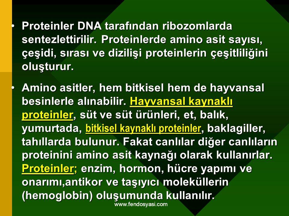 Proteinler DNA tarafından ribozomlarda sentezlettirilir