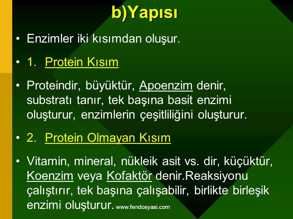 b)Yapısı Enzimler iki kısımdan oluşur. 1. Protein Kısım