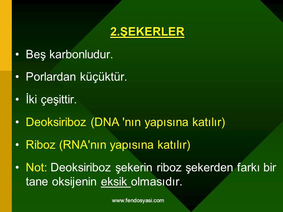 Deoksiriboz (DNA nın yapısına katılır)