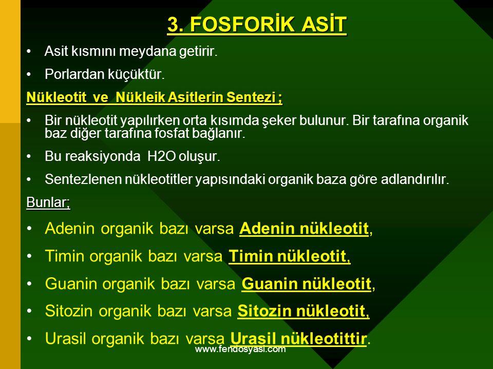 3. FOSFORİK ASİT Adenin organik bazı varsa Adenin nükleotit,