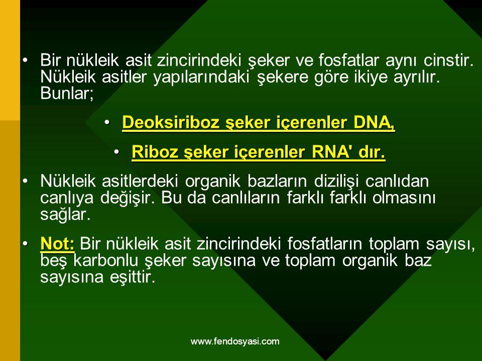 Deoksiriboz şeker içerenler DNA, Riboz şeker içerenler RNA dır.
