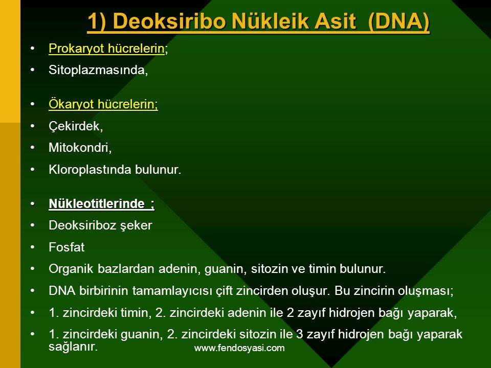 1) Deoksiribo Nükleik Asit (DNA)