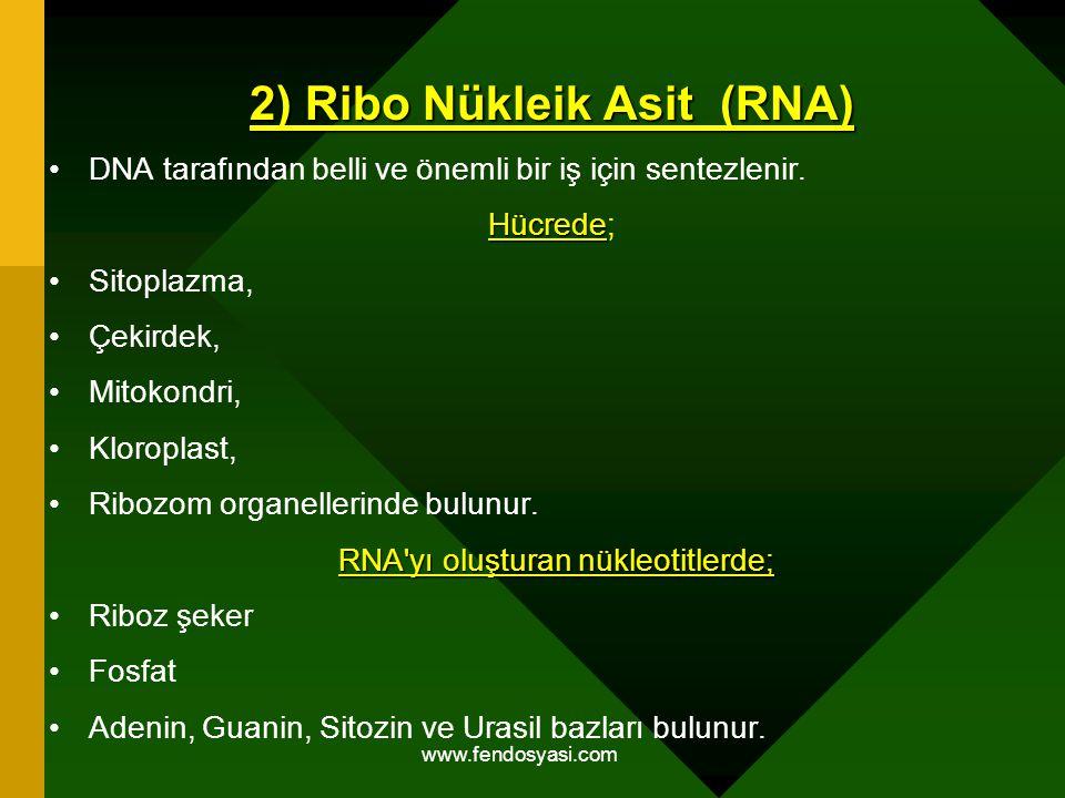 2) Ribo Nükleik Asit (RNA)