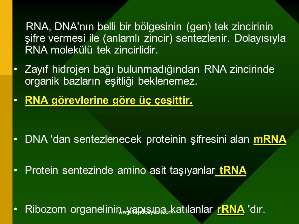 RNA görevlerine göre üç çeşittir.