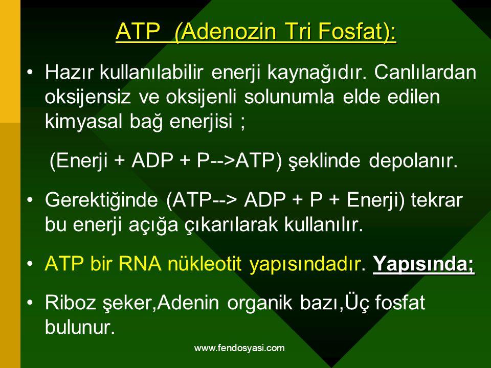 ATP (Adenozin Tri Fosfat):