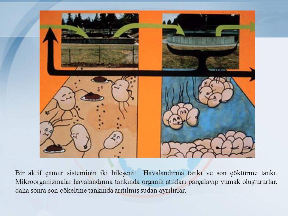 Bir aktif çamur sisteminin iki bileşeni: Havalandırma tankı ve son çöktürme tankı.