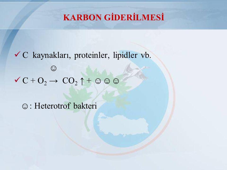 KARBON GİDERİLMESİ C kaynakları, proteinler, lipidler vb.