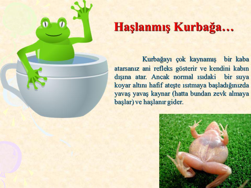 Haşlanmış Kurbağa…