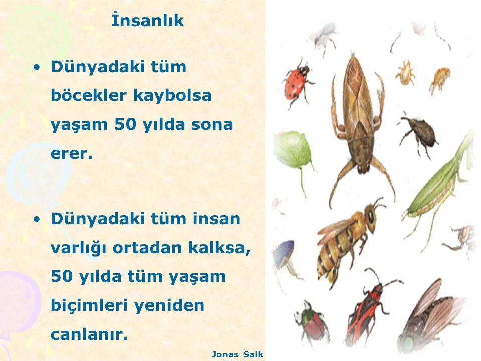 Dünyadaki tüm böcekler kaybolsa yaşam 50 yılda sona erer.