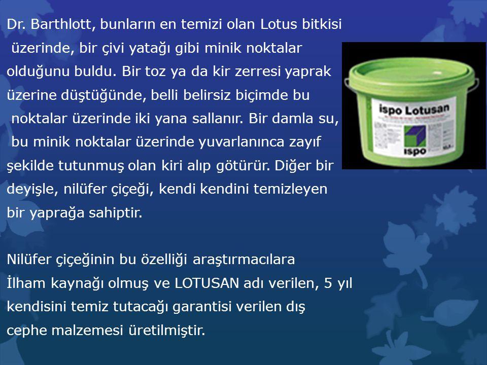 Dr. Barthlott, bunların en temizi olan Lotus bitkisi