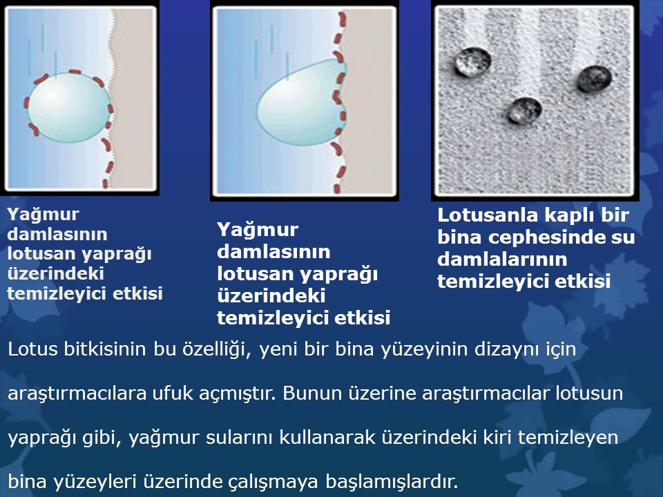 Yağmur damlasının lotusan yaprağı üzerindeki temizleyici etkisi