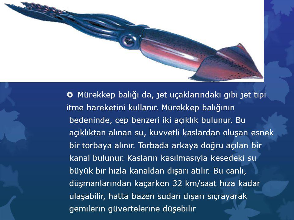Mürekkep balığı da, jet uçaklarındaki gibi jet tipi