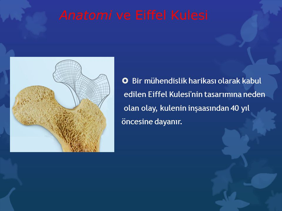Anatomi ve Eiffel Kulesi