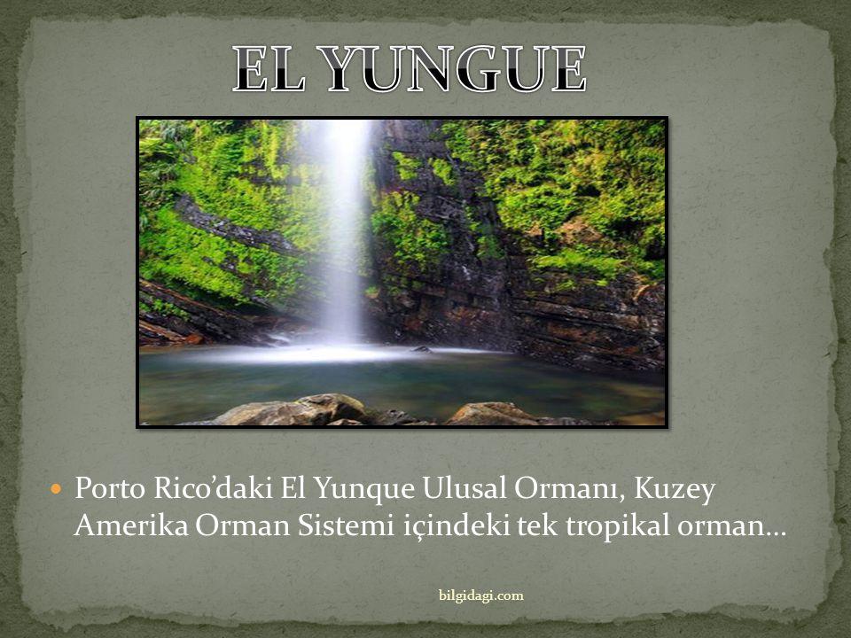 EL YUNGUE Porto Rico'daki El Yunque Ulusal Ormanı, Kuzey Amerika Orman Sistemi içindeki tek tropikal orman…