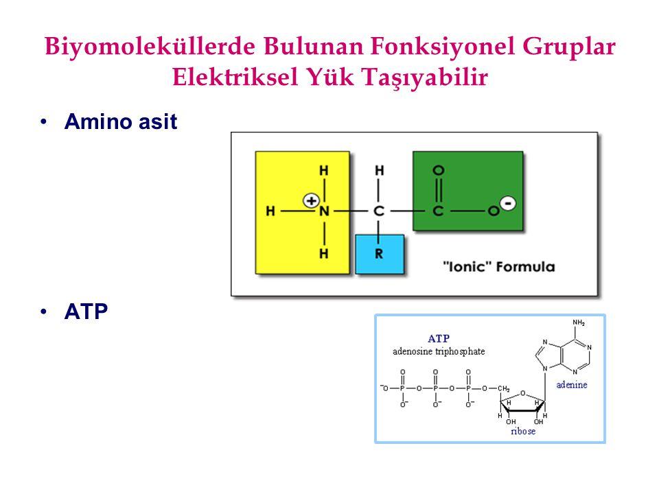 Biyomoleküllerde Bulunan Fonksiyonel Gruplar Elektriksel Yük Taşıyabilir