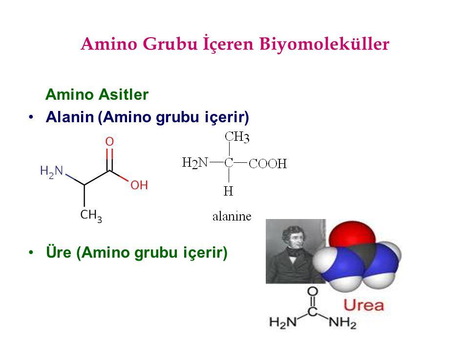 Amino Grubu İçeren Biyomoleküller
