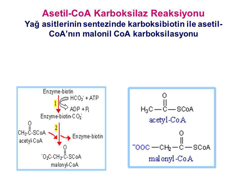 Asetil-CoA Karboksilaz Reaksiyonu Yağ asitlerinin sentezinde karboksibiotin ile asetil-CoA'nın malonil CoA karboksilasyonu