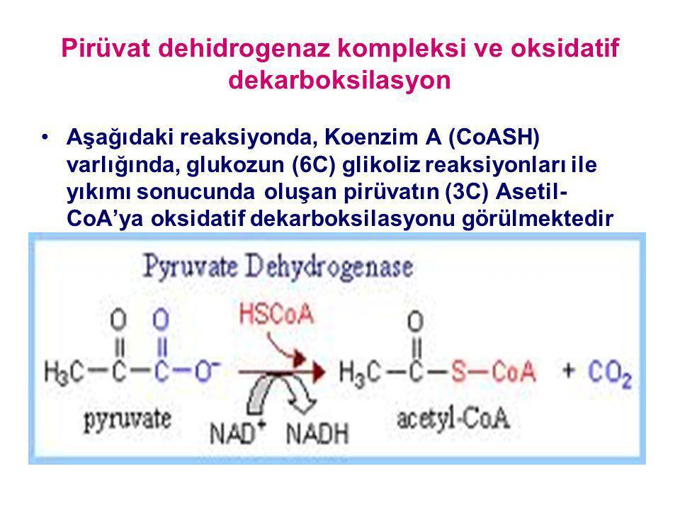 Pirüvat dehidrogenaz kompleksi ve oksidatif dekarboksilasyon
