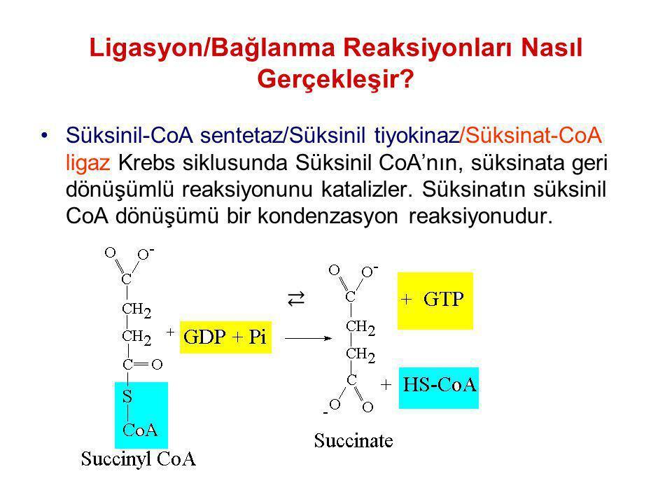 Ligasyon/Bağlanma Reaksiyonları Nasıl Gerçekleşir