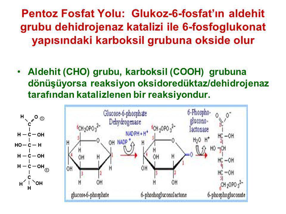 Pentoz Fosfat Yolu: Glukoz-6-fosfat'ın aldehit grubu dehidrojenaz katalizi ile 6-fosfoglukonat yapısındaki karboksil grubuna okside olur