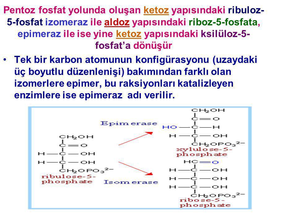 Pentoz fosfat yolunda oluşan ketoz yapısındaki ribuloz-5-fosfat izomeraz ile aldoz yapısındaki riboz-5-fosfata, epimeraz ile ise yine ketoz yapısındaki ksilüloz-5-fosfat'a dönüşür