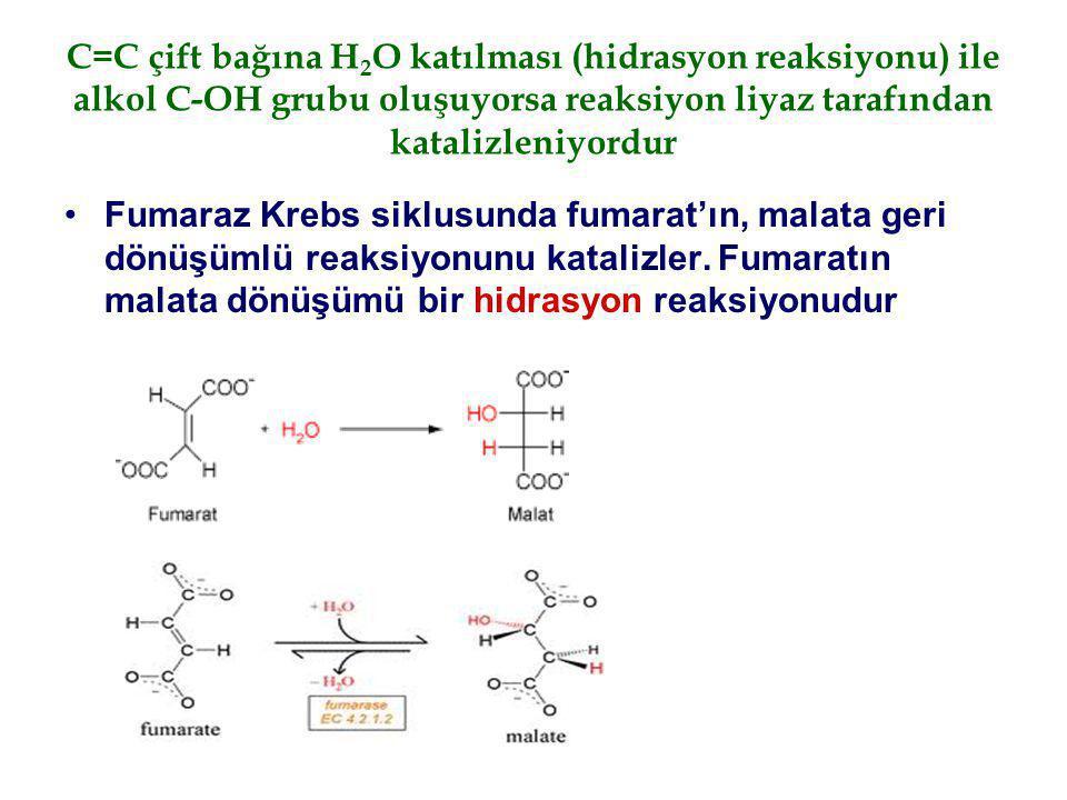 C=C çift bağına H2O katılması (hidrasyon reaksiyonu) ile alkol C-OH grubu oluşuyorsa reaksiyon liyaz tarafından katalizleniyordur