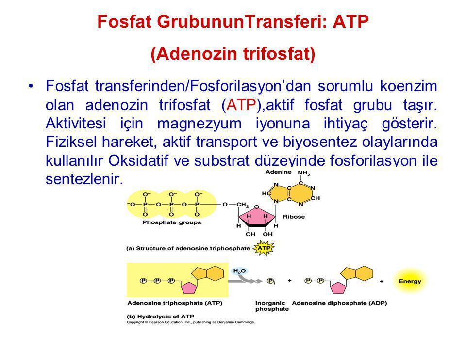 Fosfat GrubununTransferi: ATP (Adenozin trifosfat)
