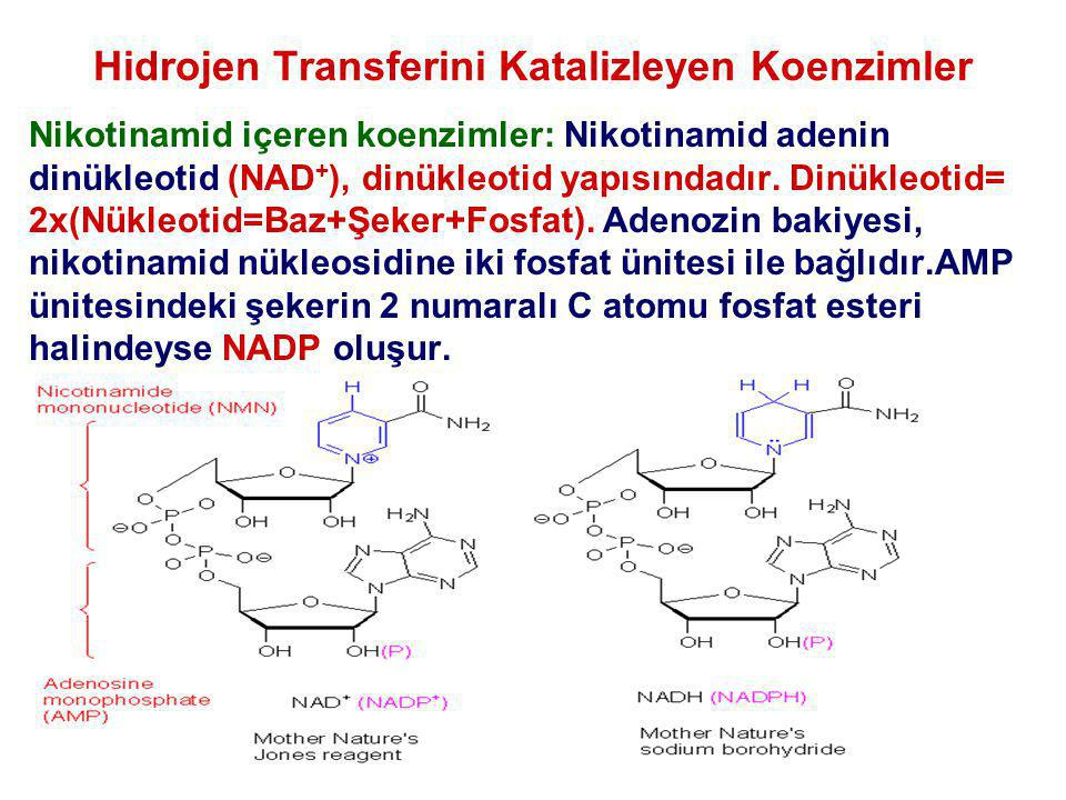 Hidrojen Transferini Katalizleyen Koenzimler